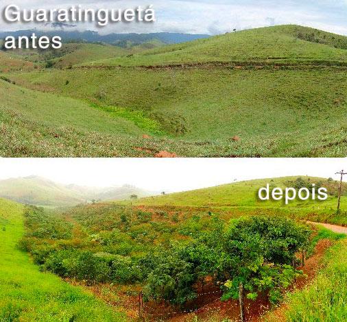Área recuperada em Guaratinguetá pela equipe ambiental do Corredor Ecológico.