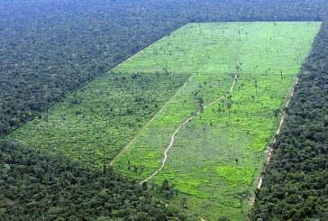 Desmatamento na Floresta Amazônica volta a crescer após 4 anos