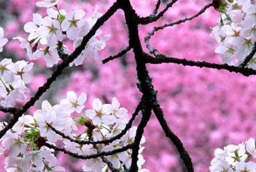 Parque das Cerejeiras em Campos do Jordão