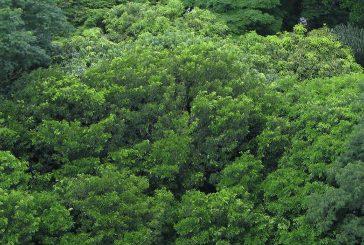 No Dia da Árvore, plante uma ideia sustentável
