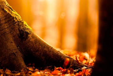 No Dia da Árvore, plante uma ideia sustentável!