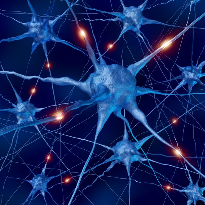 Problemas na hipófise alteram importantes funções hormonais, fique atento