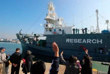 Japão retoma pesca de baleias na Antática