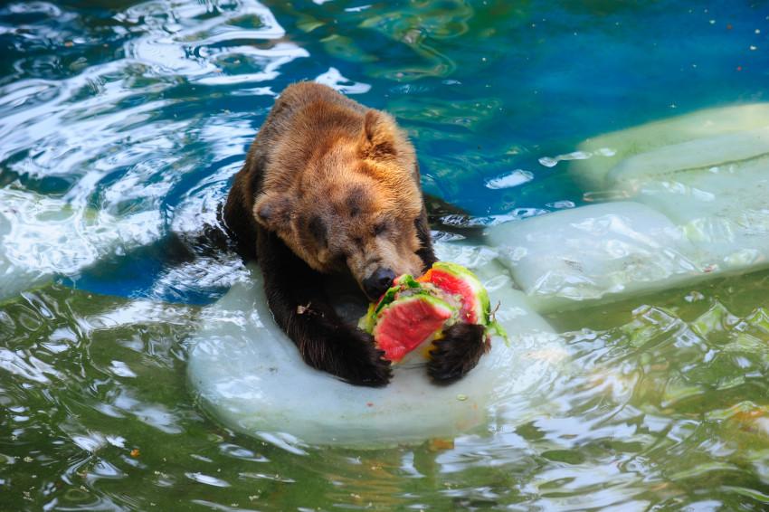 Zoológico do Rio de Janeiro deve reabrir em março